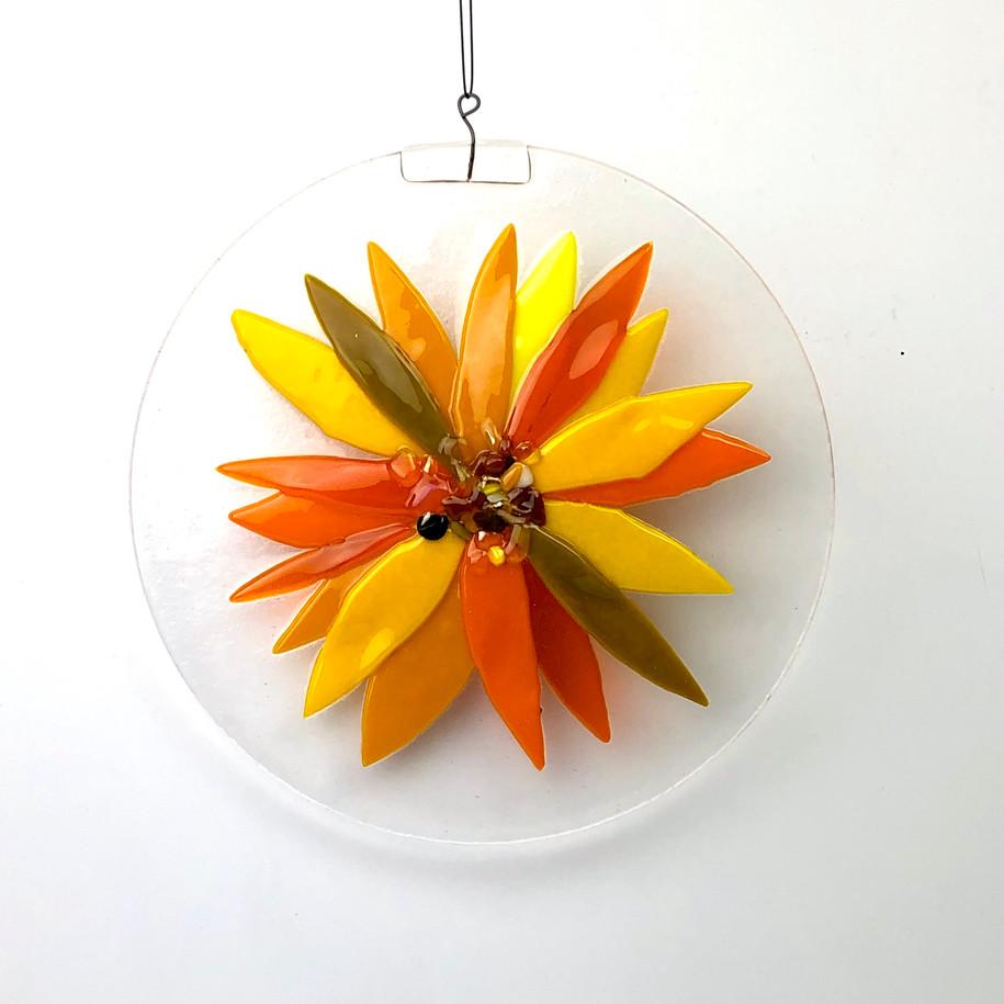 Sunflower-Daisy?