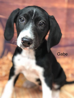 GABE - Lab Mix  See link for video