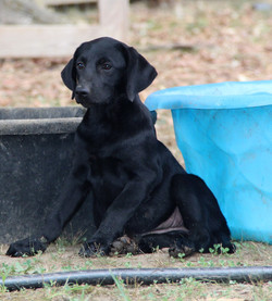 PRIE-Lab Mix-Female ADOPTED