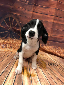 Grady-Lab Mix  See link for a video