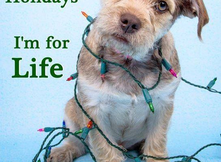 Dogs Aren't for Christmas. They're for Life