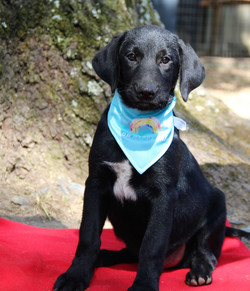 Bruce-Lab mix  ADOPTED!