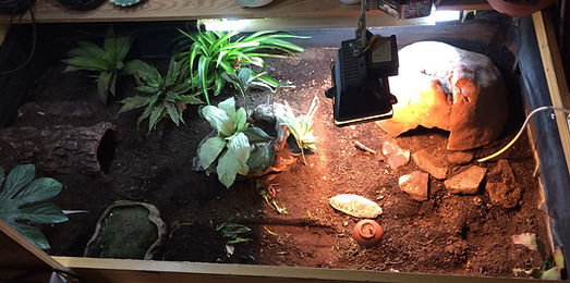 tortoise care tortoise table