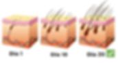 hairgrowthessence2_grande_grande-1.png
