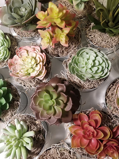 succulents group.jpg