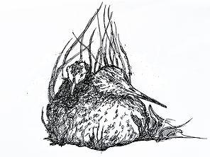 low Res For every bird a nest logo drawi