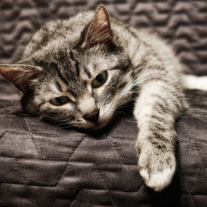 Cats and pain relief - what can be done to help