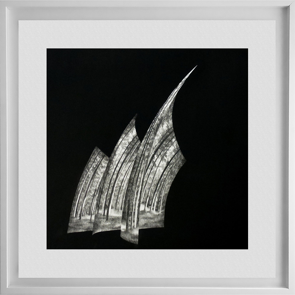 Jubilee #4, Charcoal on paper, 50 x 50cm