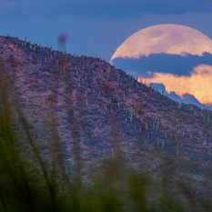Pink Moon Over Rincóns
