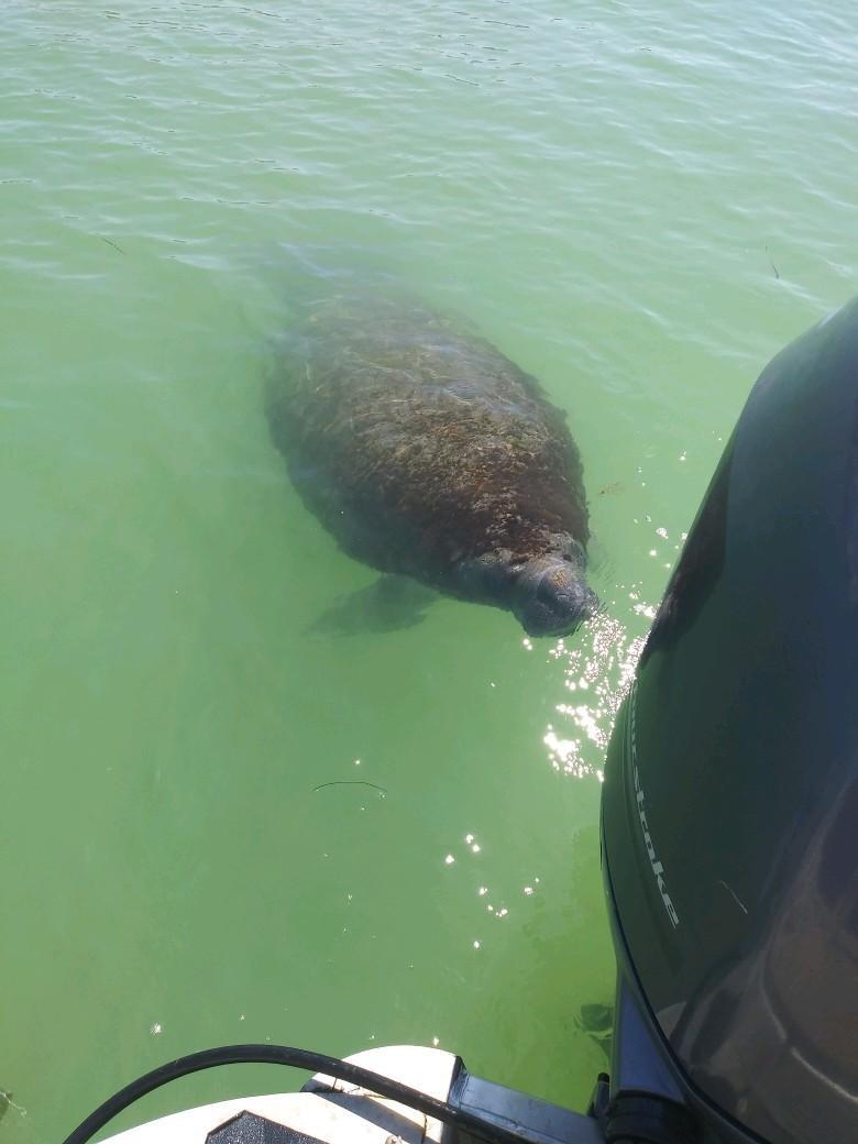 Dolphin Cruise Manatee Shell Key St Pete