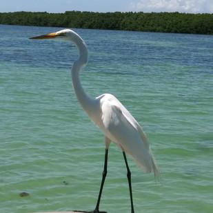 Shell-Key-Shorebird-St-Pete.jpg