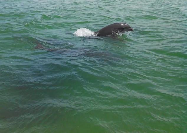 Dolphin-Cruise-Shell-Key-St-Pete.jpg