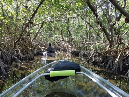 Clear Kayaks Shell Key St Pete