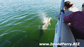 Dolphin Cruise Shell Key St Pete