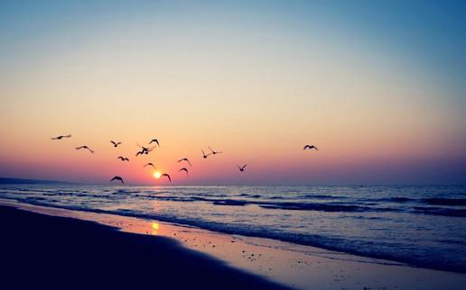 Sunset-Birds-Sea-Beach-Wallpaper-RS.jpg