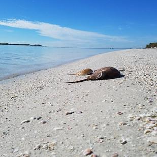 Shell-Key-Snorkeling-St-Pete.jpg
