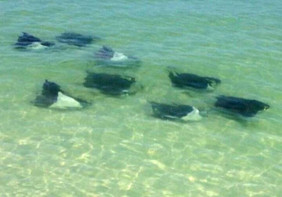 Rays Shell Key Private Snorkeling St Pete
