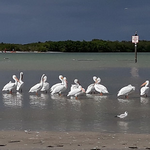 Shell-Key-Shorebirds-St-Pete.jpg