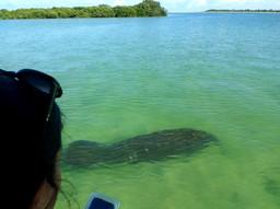 Dolphin Cruise Shell Key Manatee St Pete