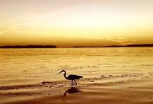 Shell Key Sunset St Pete