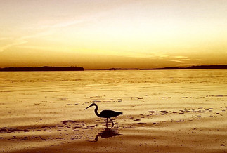 Shell-Key-Sunset-St-Pete.jpg