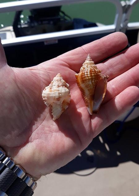 Shell-Key-Cruise-St-Pete.jpg