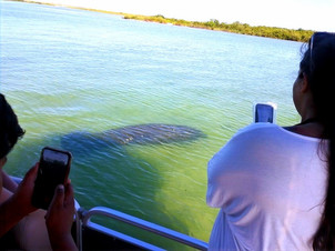 Manatees Private Snorkeling Island Ferry