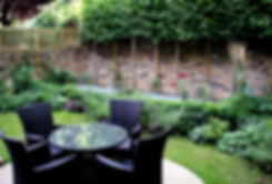 A row of pleached lime trees in a small garden with brick walls and lawn
