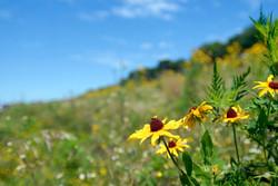 Prairie Grass