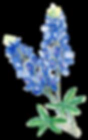 bluebonnets.png