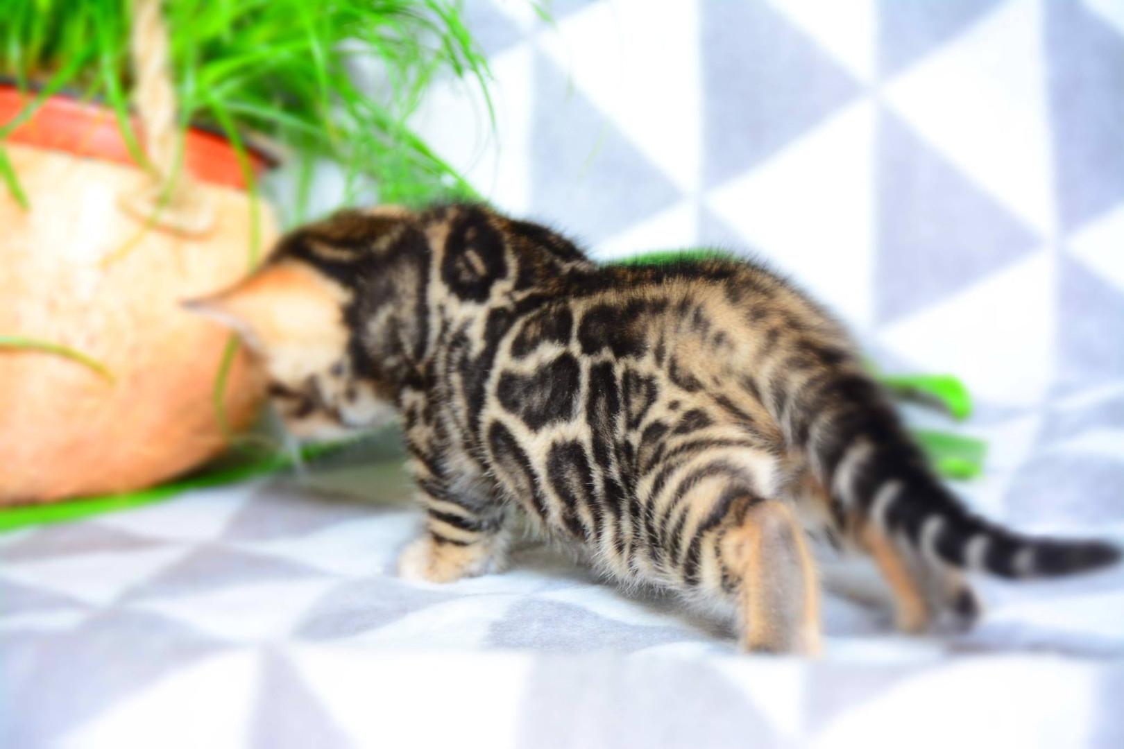 4,5 week old