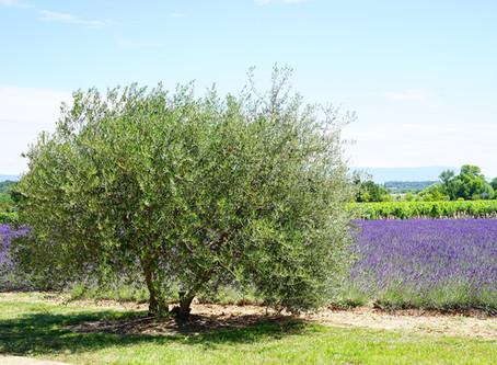 Découvrez les Alpilles et les Baux de Provence depuis Embarben