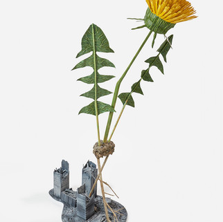 Pervasive: Dandelion