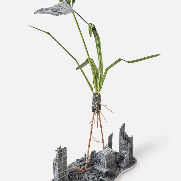 Pervasive: Barnyard Grass