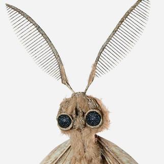 Pervasive: Gypsy Moth (detail)