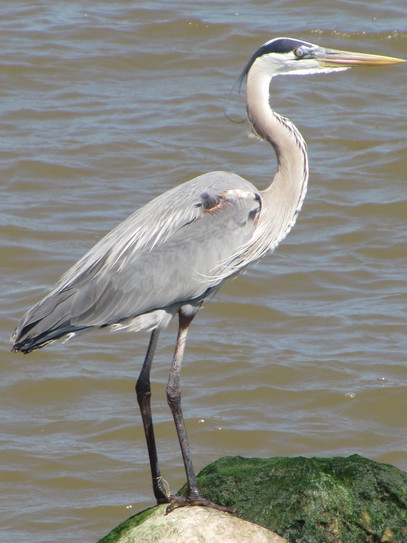birdport_edited_edited.jpg
