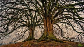 Model Four : Merkle Tree