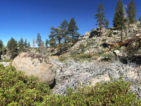 Pacific Crest Trail Diary 3: Day 35 (Lone Pine, California)