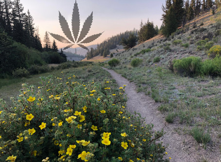"""""""Why I Never Smoked Weed on the Colorado Trail"""""""