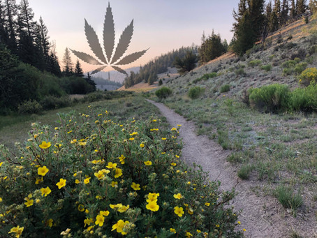 """Why I Never Smoked Weed on the Colorado Trail"""
