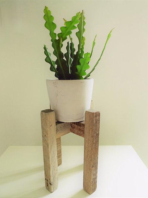 Cactus, Planter & Rustic Stand