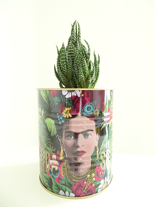 Haworthia in Frida Kahlo Planter