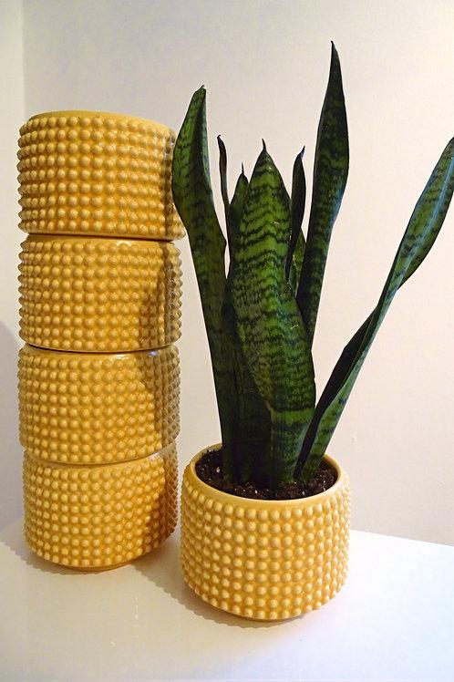 Yellow Bobble Planter