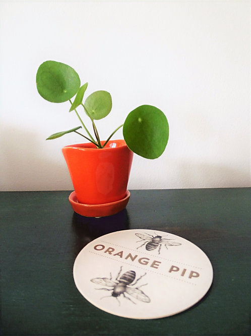 Small Orange Pip Planter