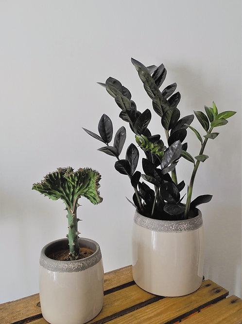 Urban Taupe Ceramic Planter