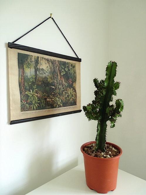 Euphorbia tetra