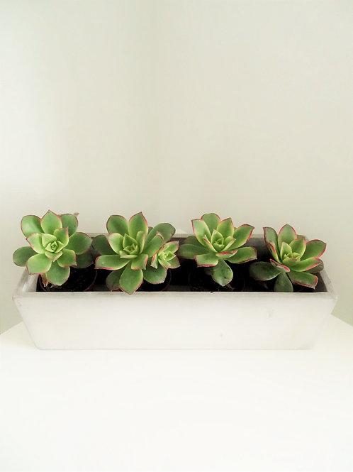Oblong Concrete Planter with Cacti