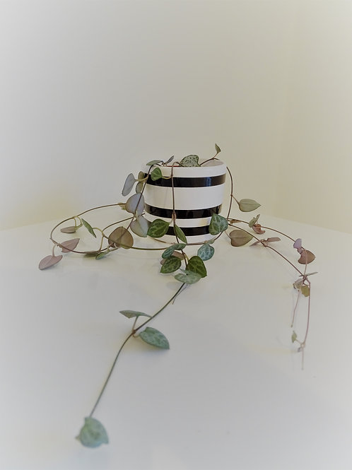 Small Monochrome Striped Planter