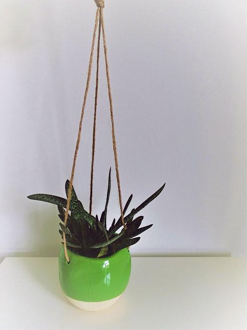 Green & Cream Dipped Hanging Planter