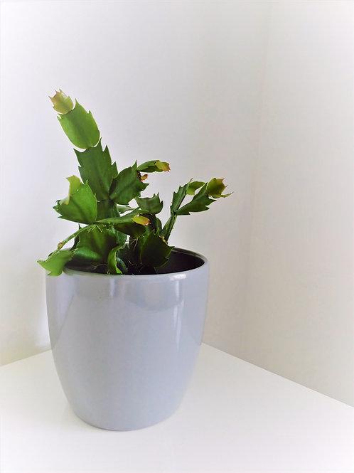 Minimal Grey Planter